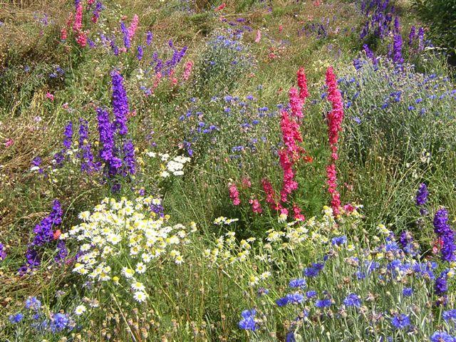 Concours de mars fleurs des champs - Bouquet de fleurs sauvages ...