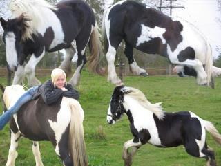 L'éthologie par amour pour vos chevaux