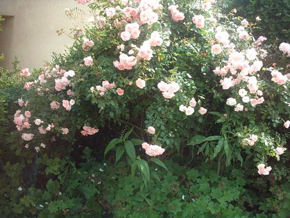 rosier10