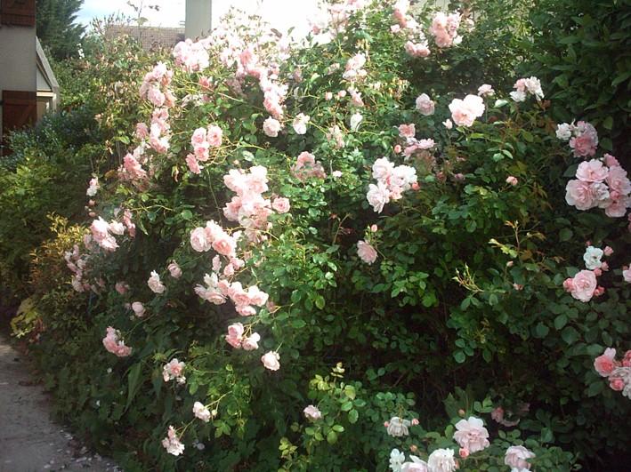 rosier11