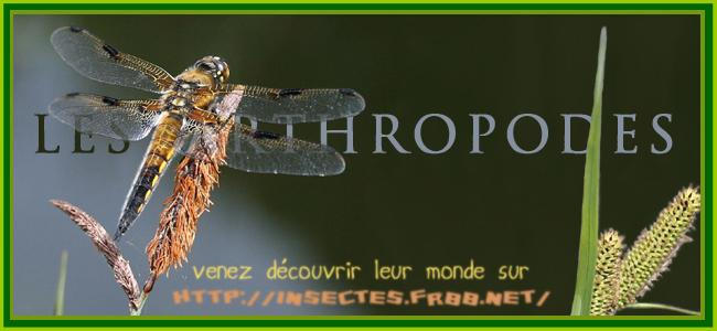 Les Arthropodes.
