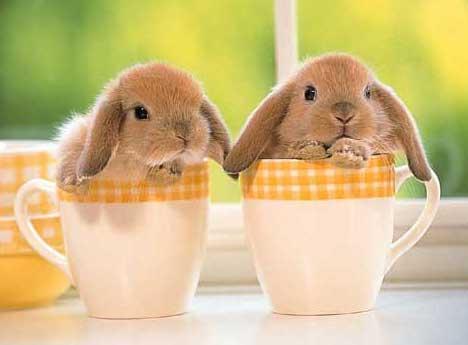 KIT GRATUIT POUR VOTRE ANIMAL dans Animaux lapino10