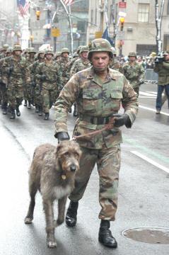 un wolfhound irlandais dans la parade de la Saint-Patrick a New York en 2004