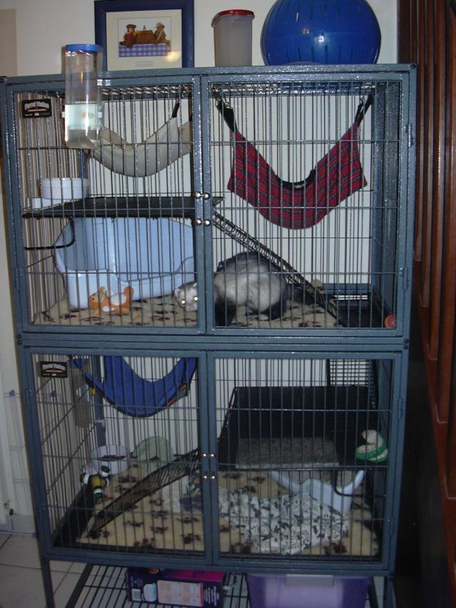 urgent vends cage nation 2. Black Bedroom Furniture Sets. Home Design Ideas