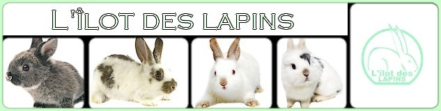 L'îlot des lapins