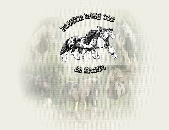 Passion Irish Cob en France