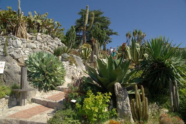 Jardin exotique d 39 eze alpes maritimes - Jardin exotique d eze ...