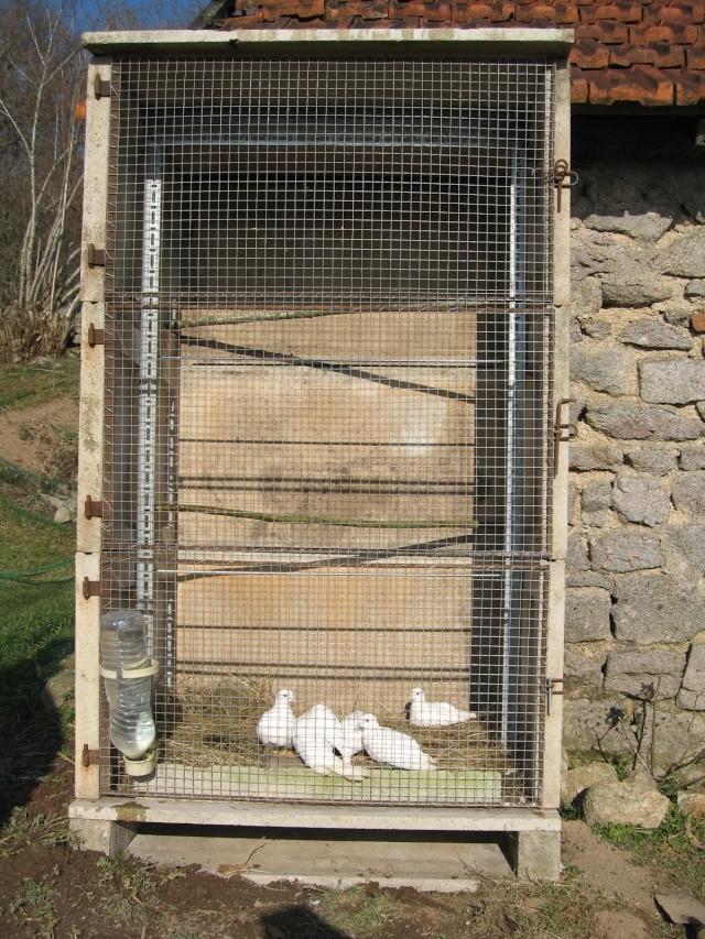 H tel cinq toiles pour colombes - Jardin interieur montreal colombes ...
