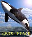 Conéctate directamente con GreenPeace
