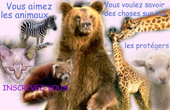 love-animaux