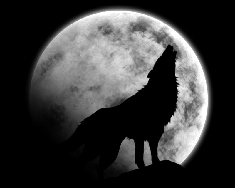 Le Loupscovers