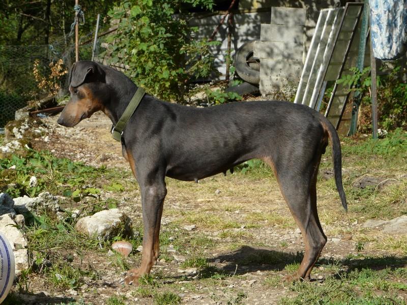 colliers anti aboiement pour chiens