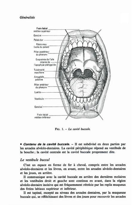 Anatomie dentaire lautrou