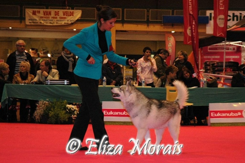 expo canine internationale d u0026 39 orl u00e9ans