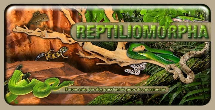 Reptiliomorpha