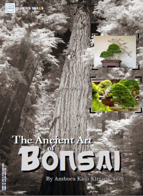 The Ancient Art of Bonsai