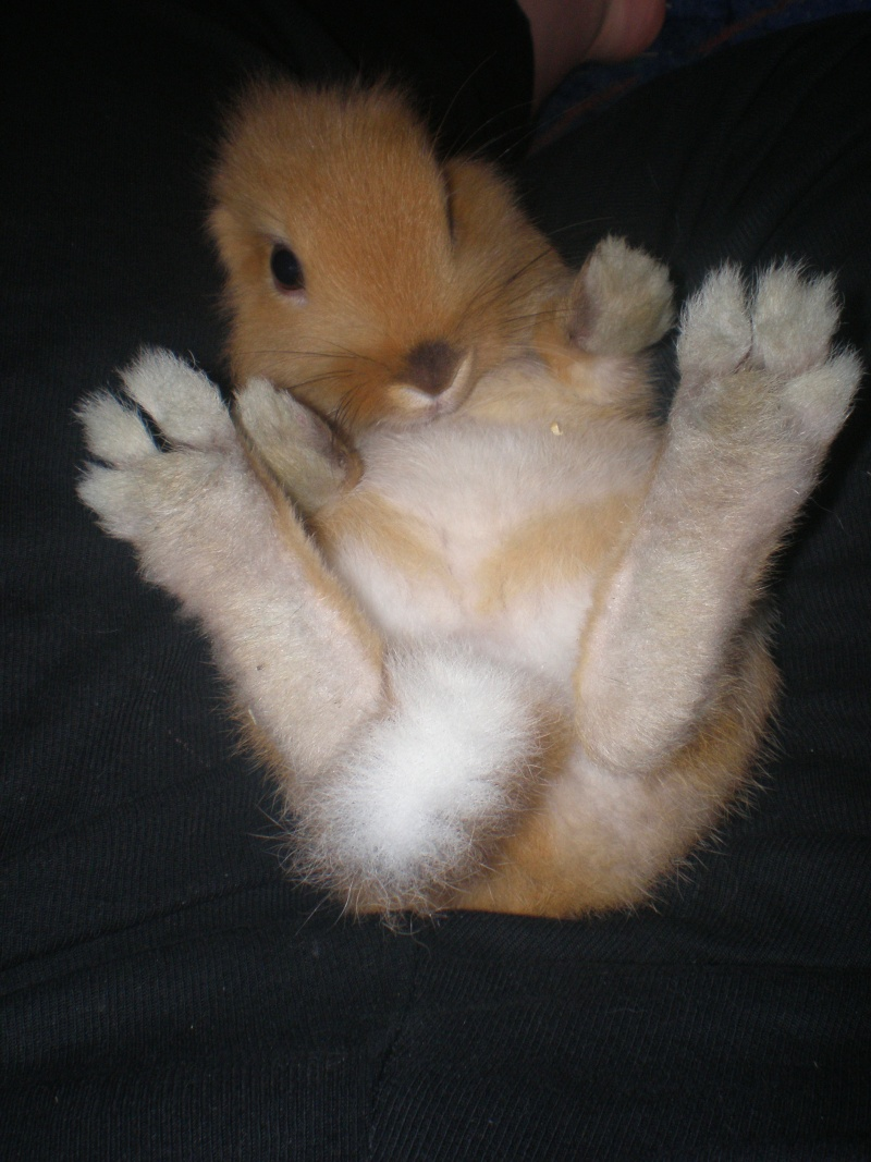 Dessous des pattes jaunes - Patte de lapin peinture ...