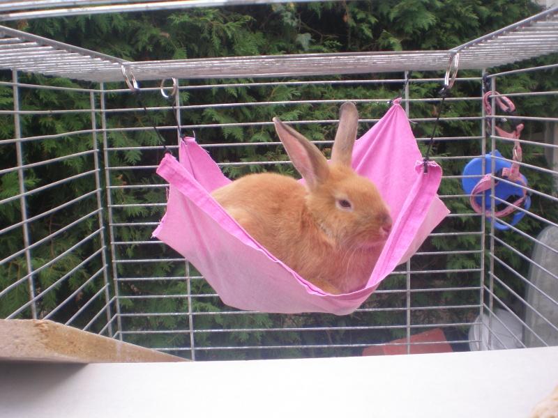 comment construire une maison pour lapin comment construire une maison pour lapin ventana blog. Black Bedroom Furniture Sets. Home Design Ideas