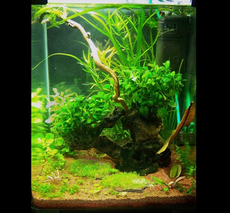 40L Nano cube Treeland et ses crevettes