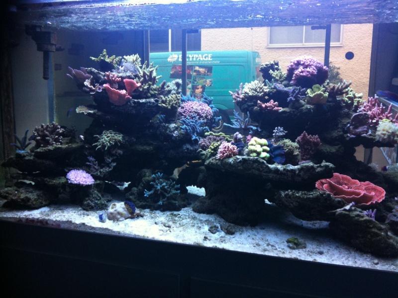 Le bac d 39 aquarium r cifal st phane for Aquarium bac