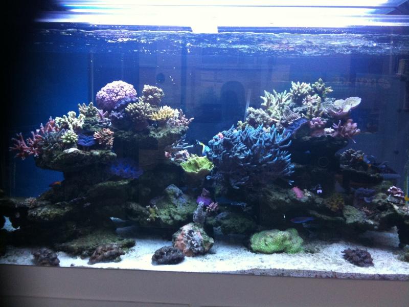 le bac d 39 aquarium r cifal st phane. Black Bedroom Furniture Sets. Home Design Ideas