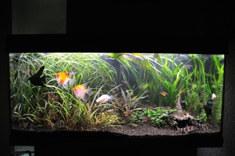 180 litres eau douce bac communautaire for Achat aquarium eau douce