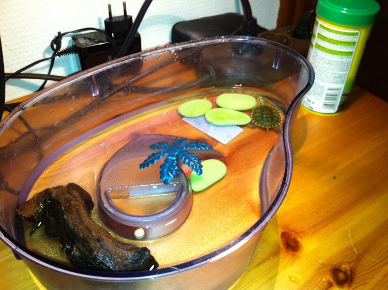 Quel type d 39 aquaterrarium thibaut - Aquarium complet pour tortue d eau ...