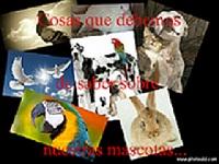 este es el nuevo foro http://foro.palomasbuchonas.org/index.php