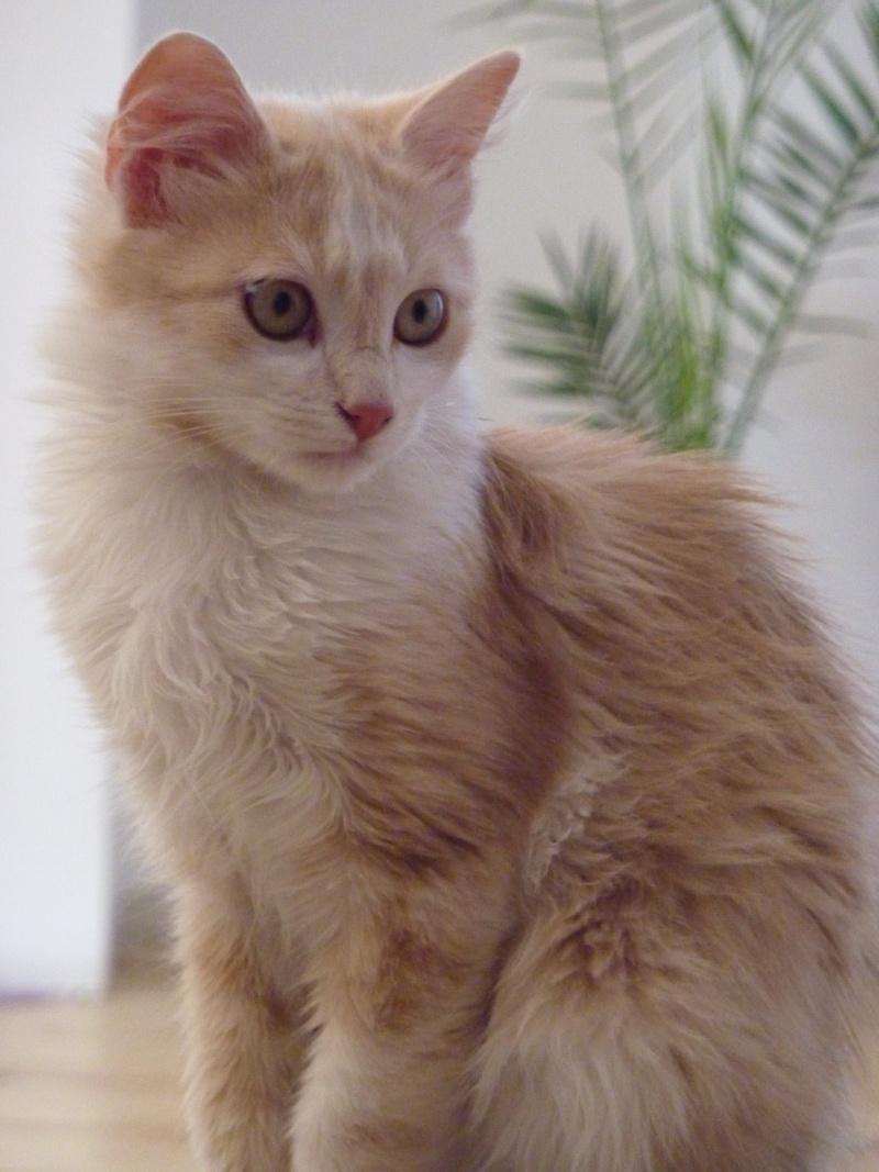 Dpt 48 3 chatons de 5 mois 2 m les 1 femelle les - Couper les griffes d un chaton de 2 mois ...