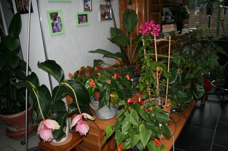 arrosage automatique special vacances pour plantes d 39 interieur. Black Bedroom Furniture Sets. Home Design Ideas