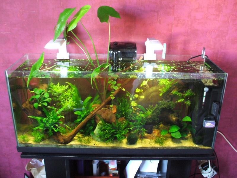 Mon bac 120l ouvert biotope asiatique bichon for Aquarium ouvert